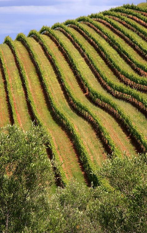 Tokara Vineyards in the #capewinelands