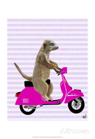 Meerkat on Pink Moped Posters by Fab Funky at AllPosters.com