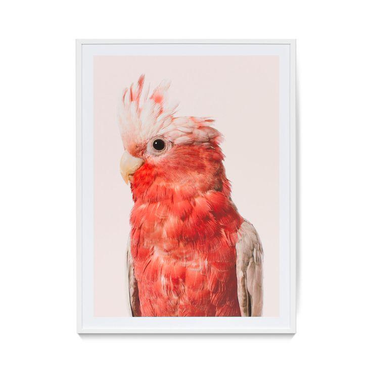 Cockatoo Print - Wall Art
