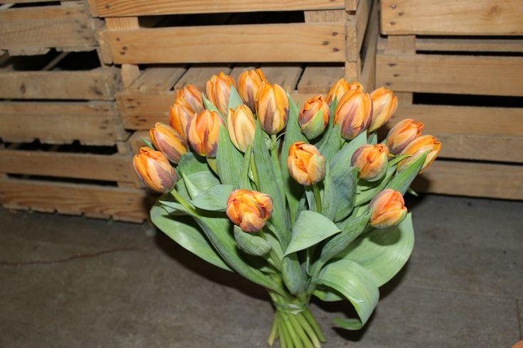 Tulpenstrauss orange ausgeliefert in Münsingen bei Bern