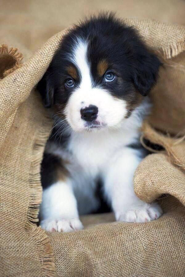 Sehr süß mit blauen Augen