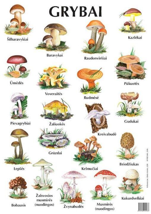 Lithuanian Mushrooms