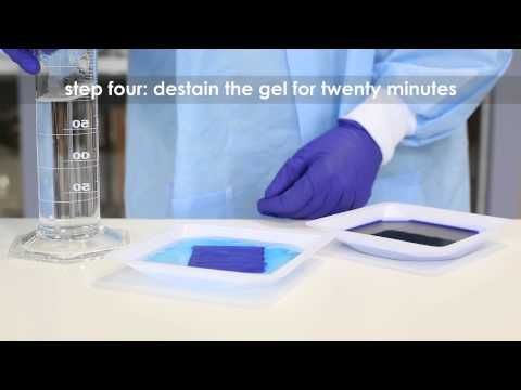 Staining DNA electrophoresis gels with FlashBlue™ - Edvotek Video Tutorial