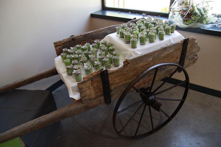 présentation cadeau invité: petite plante grasse dans un petit pot en verre