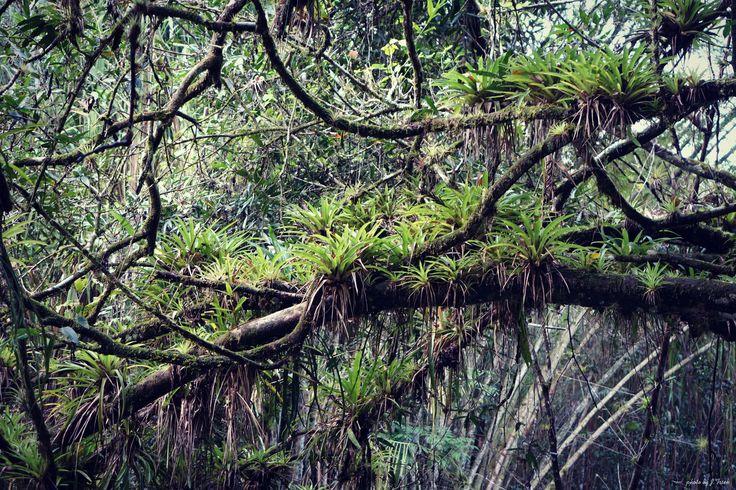 Jungle,Cuba 2015
