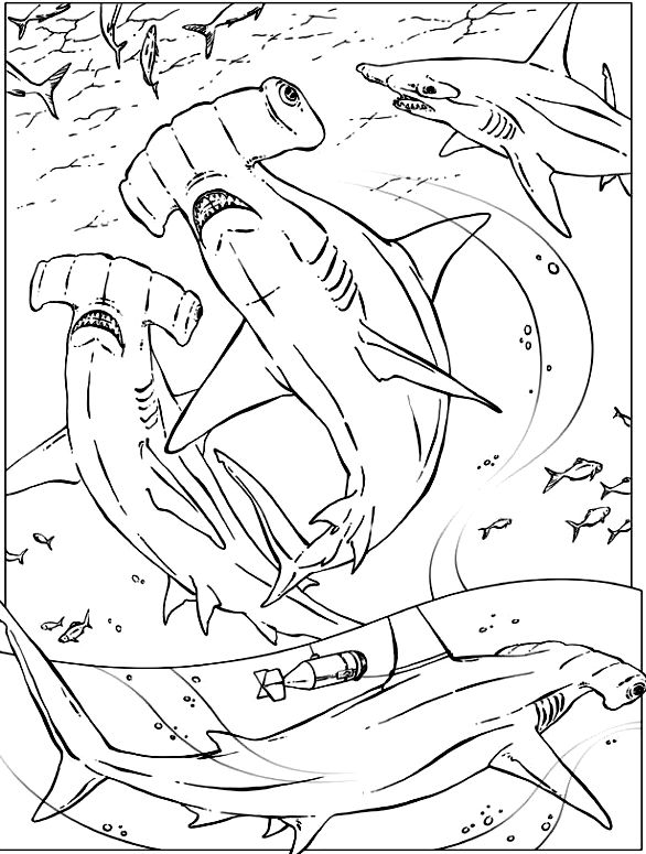 Shark coloring pages color plate
