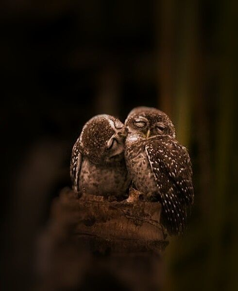 "Owls: ""A little affectionate nibble here and there..."""