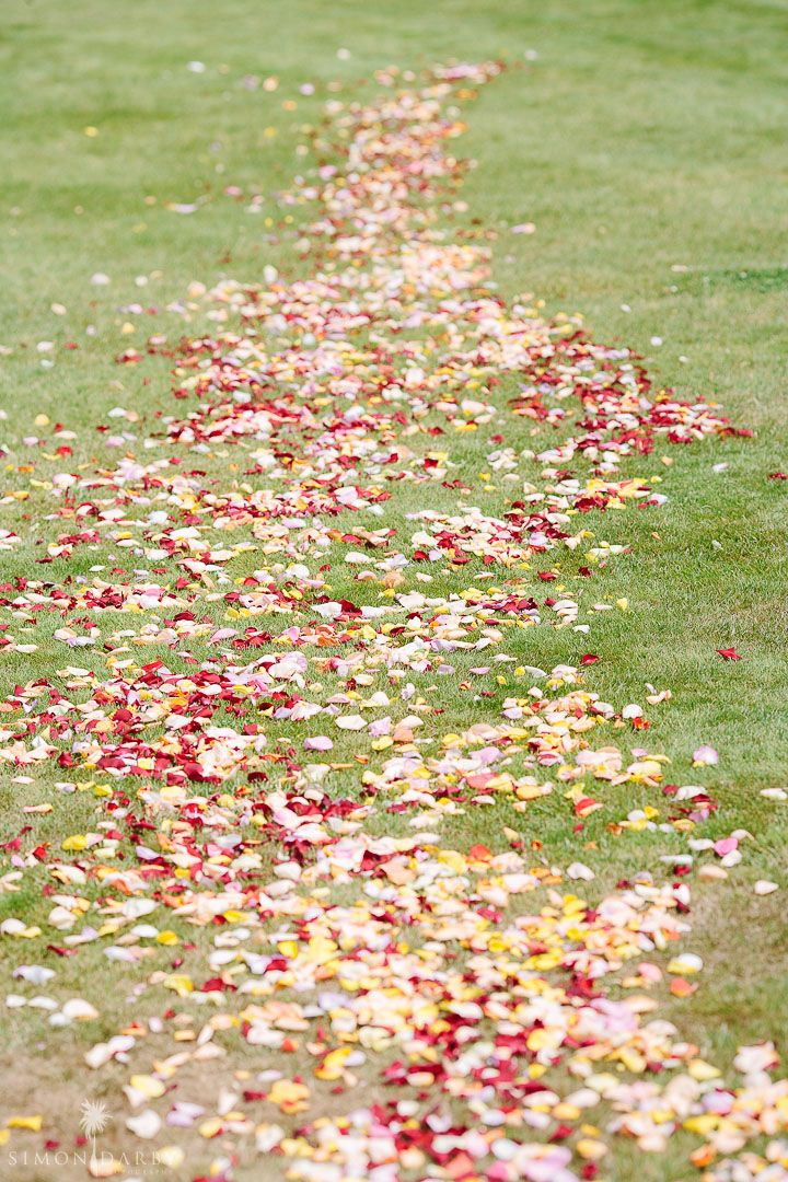 colour with rose petals  Photography Simon Darby