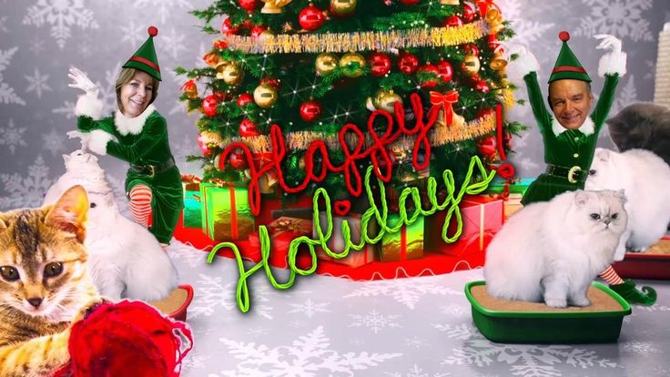 About holiday on pinterest elves coastal christmas and elf yourself