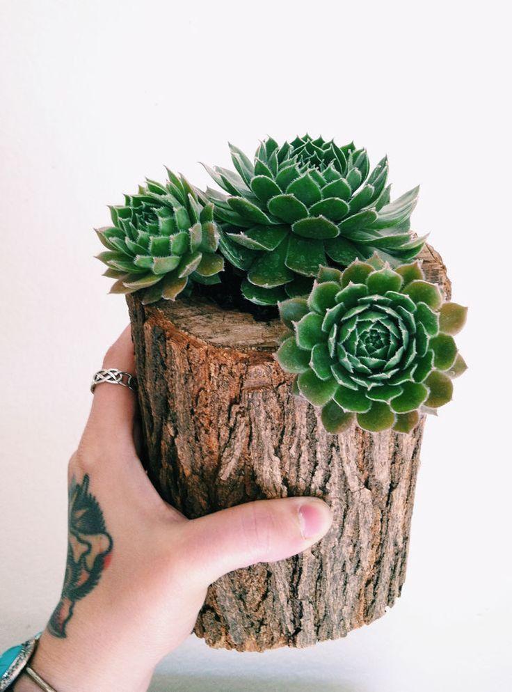 Make this little log Hen & Chicks planter - saw, router bit, drill, soil plants. VOGLIA DI VERDE IN CASA