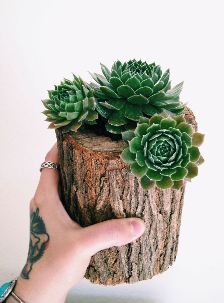 Make this little log Hen & Chicks planter - saw, router bit, drill, soil plants. VOGLIA DI VERDE IN CASA