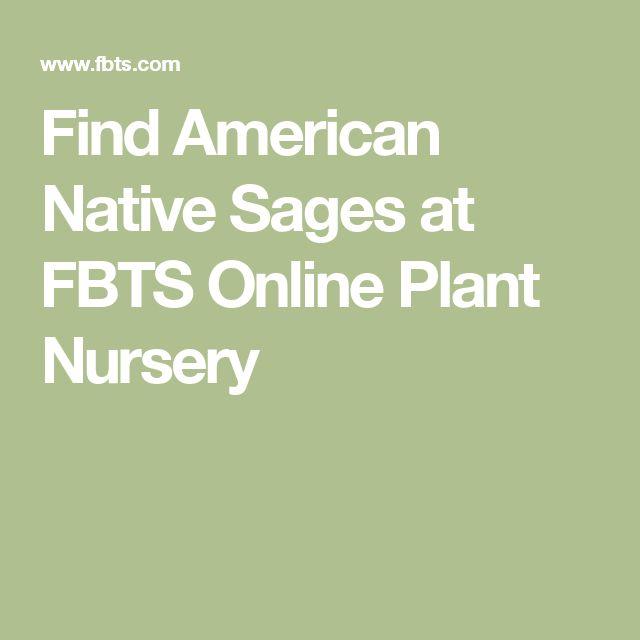 Find American Native Sages at FBTS Online Plant Nursery