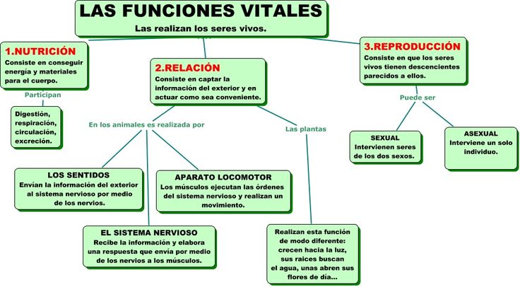LAS FUNCIONES VITALES #seresvivos #biodiversidad