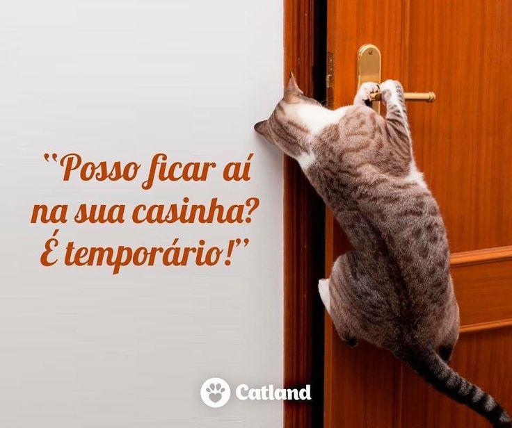 """406 curtidas, 4 comentários - Catland - Adoção de Gatinhos (@catlandrescue) no Instagram: """"Você tem um espaço aí na sua casa? Gostaria de oferecer Lar Temporário para um gatinho? Ou dois? Ou…"""""""