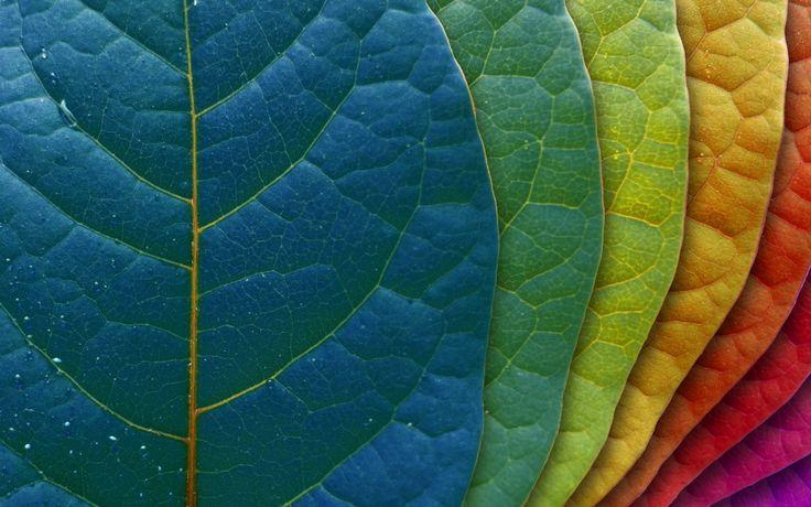 Pretty Pantone leaves wallpaper