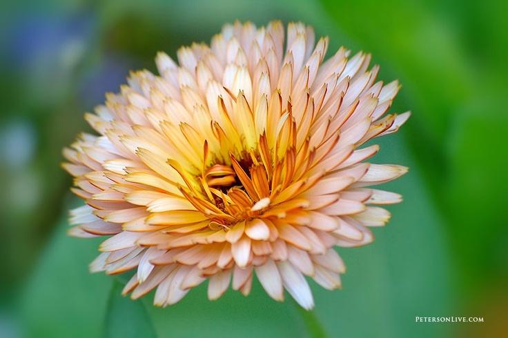 Yellow Flower, Summer Beauty! Hi-Res Digital Download: $6.99Yellow Flowers, Flower Photos, Flower Photographers