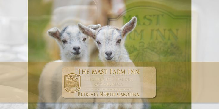 Owners & Staff | http://www.mastfarminn-retreats.com/overview/owners-staff | The Mast Farm Inn is owned and managed by Danielle Deschamps Stabler, Andrew Long, and Henri & Marie-Henriette Deschamps, and a staff of 30 highly competent & dedicated culinary and hospitality professionals.