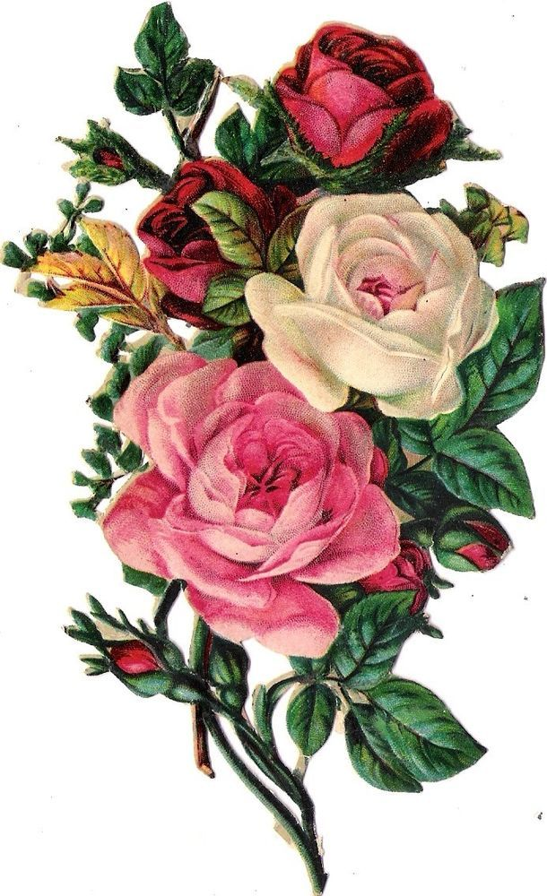 Oblaten Glanzbild scrap die cut chromo  Blume flower  14,8 cm  Rose
