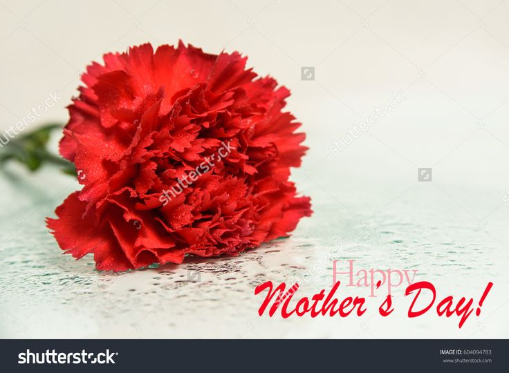happy mother's day background with red flower