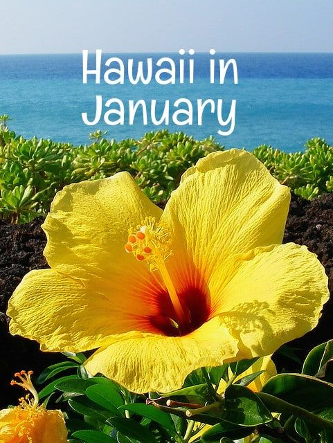 Is January the perfect time for your Hawaii vacation? Let's look at all the important factors -- weather, costs, crowds and events -- to help you decide. What's the weather like in Hawaii in January? Hawaii's weather is warm year round -- even in the middle of winter. Hawaii's weather is warm...