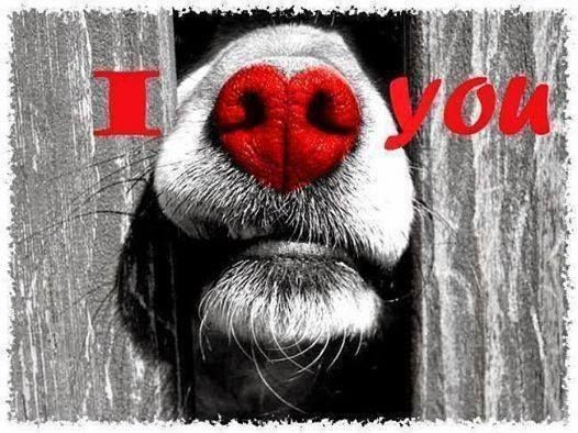 So sweet... I will probably never see a dogs nose quite the same again once I saw this sweet picture!