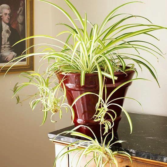 8 plantas de interior muy sencillas de cultivar