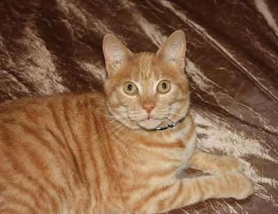 Simba, my 8 year old orange tabby, escaped through an accidentally left open back door.  I was frantic upon returning home from work to find him missing.