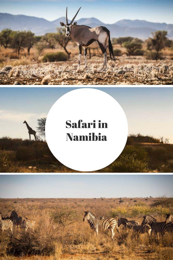 Safari in Namibia, Afrika: In der Kalahari oder Namib Wüste könnt ihr Oryx, Giraffen oder Zebras sehen. Lest mehr im Reiseblog!