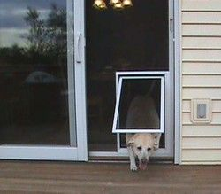 A Pet Screen Door That Is Available For Any Size Cat Or Dog, Uses Super  Screen Pet Screen For Optimal Protection Against Tearing.
