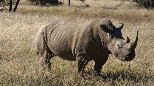 Safari i Namibia - Safari in Namibia  http://travels.kilroy.no/destinasjoner/afrika/namibia/safari
