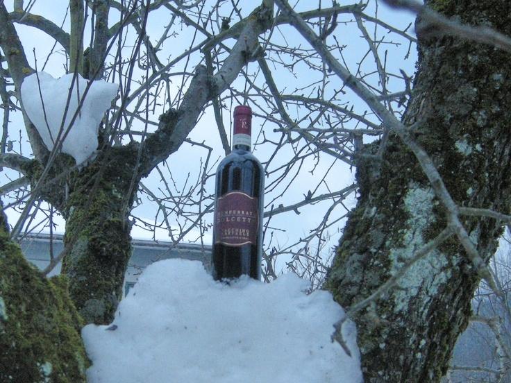 dolcetto delle nevi