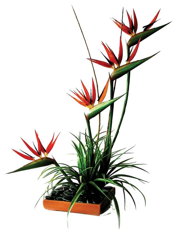 52 best Bird of Paradise Floral Displays and Bouquets images on ...