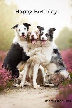 Three-Dog-Happy-Birthday-Wishes-Image.jpg (236×354)