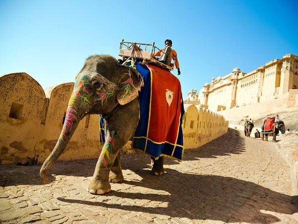 Exploring Amber Fort and Enjoy Elephant Safari