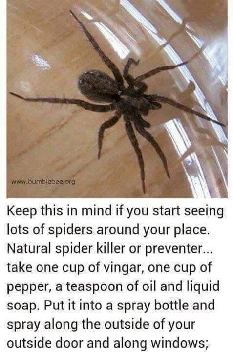 #spiders #getridofthem #DIY #lifehacks #tips #tricks