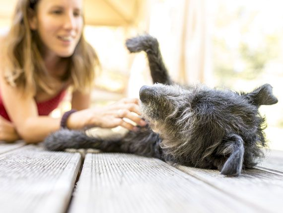 Flea and Tick Medicine for Dogs Cats and How to Switch Products | petMD
