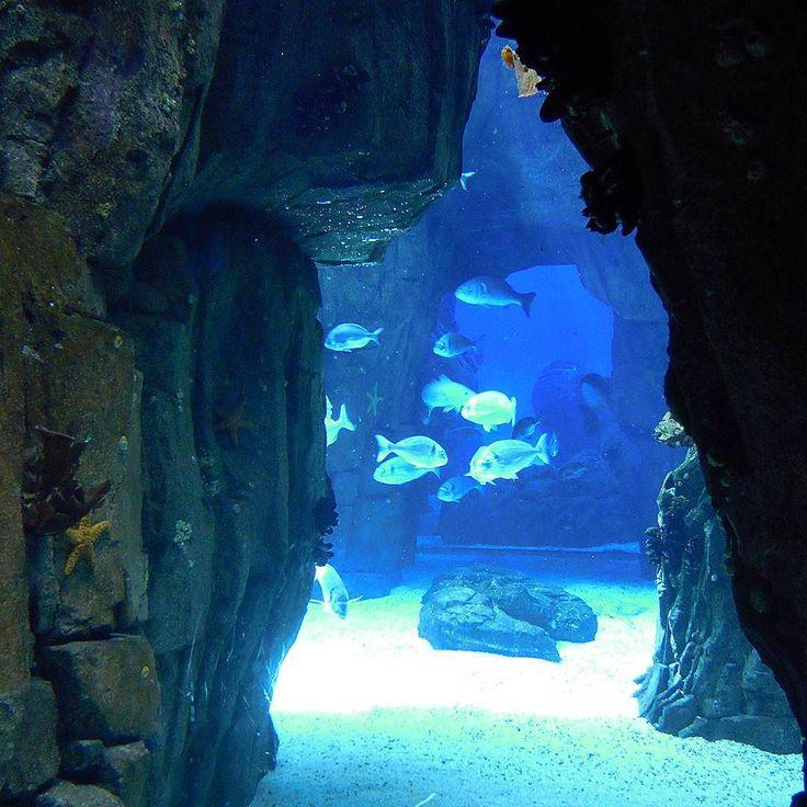 Lisbon Oceanarium  #oceanariodelisboa #oceanario #oceanarium #aquarium #lisbonoceanarium #fish #instafish #fishlovers #marinelife #oceanoazul #savetheoceans #lisboa #lisbon #lisbonne #lissabon #lisbona #Лиссабон #里斯本 #リスボン #instalike #instalisboa #instalisbon #instatravel #instacool #instagood #visitlisboa #visitlisbon #visitportugal #portugal #walkinginlisbon