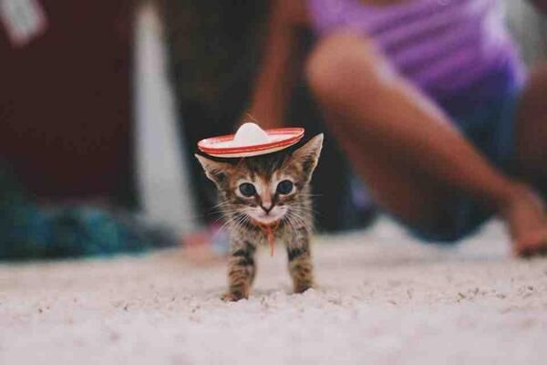 A kitten in a tiny sombrero.