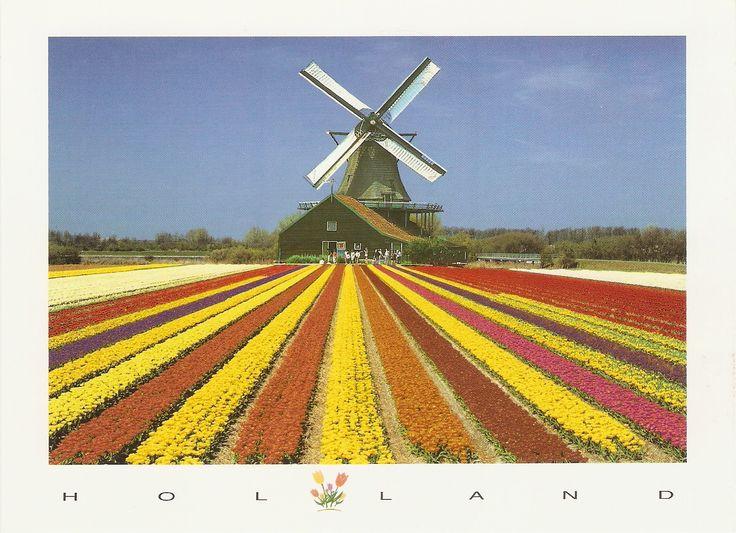 Holandsko polia tulipánov