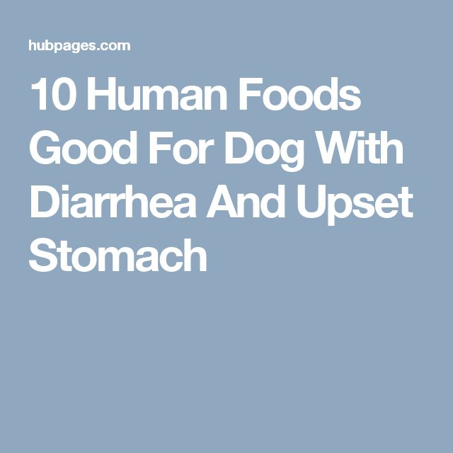 10 Human Foods Good For Dog With Diarrhea And Upset Stomach