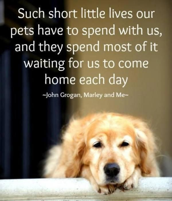 Dog Quotes Love 1865 Best Dogs Images On Pinterest  Doggies Funny Animal Pics And