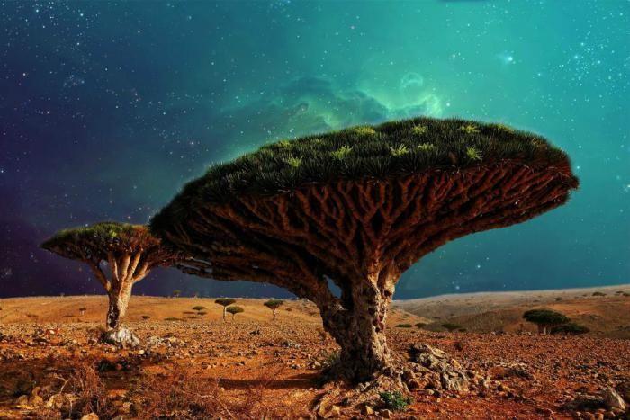Деревья, в существование которых сложно поверить (21 фото)  🔥http://nlo-mir.ru/palnetazemla/54736-derevja-v-suschestvovanie-kotoryh.html  {{AutoHashTags}}