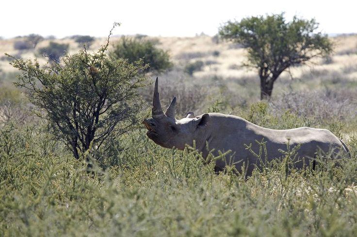 Leoni e Rinoceronti : si parte dal Kruger National Park, dove percorreremo anche strade secondarie tra le più belle del parco e zone vietate al…