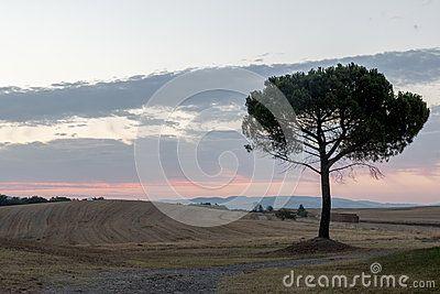 Landscape of Val D Orcia