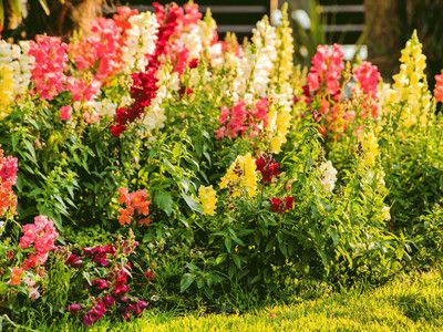 Here's How To Grow Your Own Bouquet With A Cut Flower Garden | Southern Living