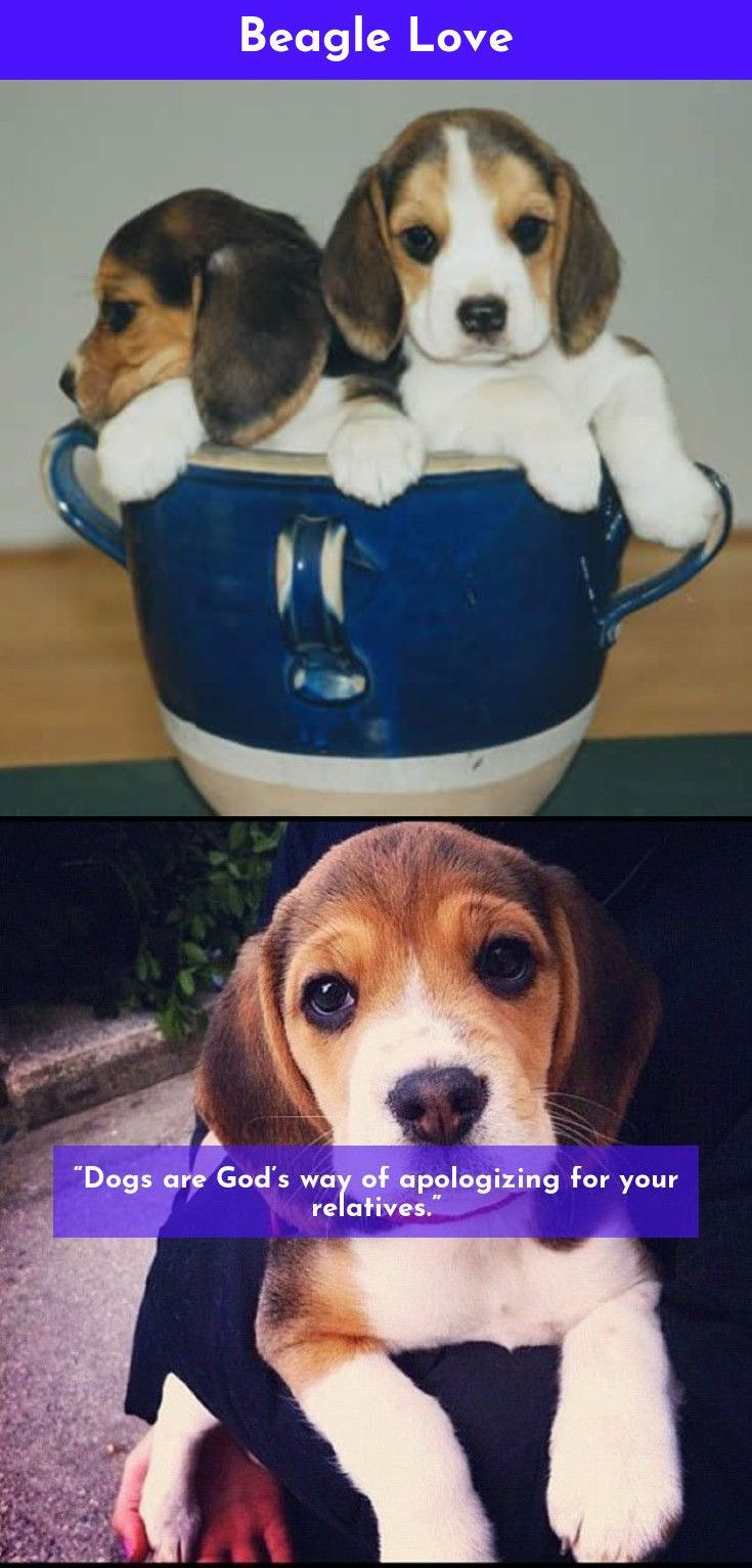 Click The Link To Learn More Beagles Beagles Check The Webpage To