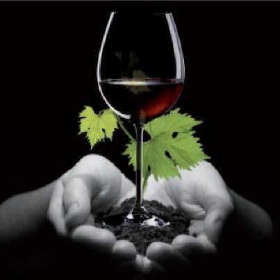 Il vino è la poesia della terra. (M. Soldati)