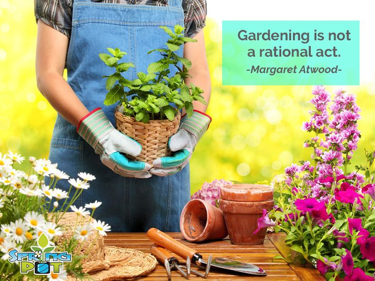 If #Gardening is irrational, let us lead the way!  #WhoIsIn?!   #Garden #Quoteoftheday #Gardening #FabricPots #SpringPots #MrSpringPot #MoreGreenInTheSpring #WisdomWednesday #Wednesday #Wisdom