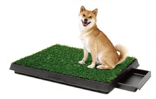 Pee Wee Dog Park Indoor Dog Toilet - http://www.thepuppy.org/pee-wee-dog-park-indoor-dog-toilet/