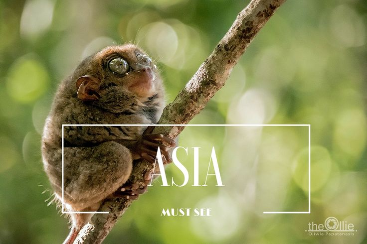 MUST SEE ASIA  the-ollie.com
